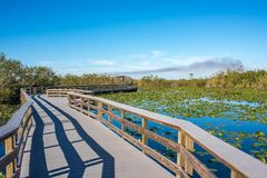Parque nacional dos marismas em Florida fotografia de stock royalty free