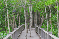 Parque nacional en Tailandia Fotos de archivo libres de regalías