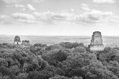 Parque nacional Guatemala de Tikal blanco y negro imagen de archivo libre de regalías