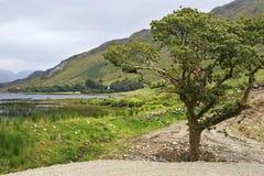 Parque nacional hermoso Connemara Foto de archivo