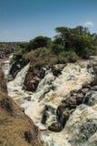 Parque nacional inundado fotografia de stock royalty free