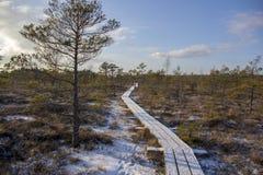 Parque nacional Letonia de Kemeri en invierno Imagen de archivo libre de regalías