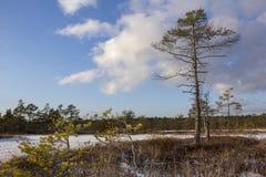 Parque nacional Letonia de Kemeri en invierno Fotografía de archivo