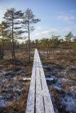 Parque nacional Letonia de Kemeri en invierno Imágenes de archivo libres de regalías