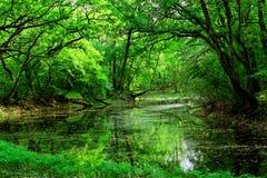 Parque nacional Lunca Muresului Fotografia de Stock