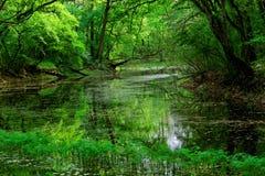 Parque nacional Lunca Muresului Foto de Stock