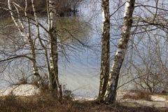 Parque nacional Maasduinen, Países Baixos Foto de Stock Royalty Free