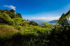 Parque nacional Malásia de Cameron Highlands fotos de stock royalty free