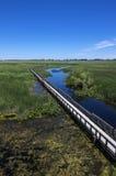Parque nacional Marsh Boardwalk #2 de Pelee do ponto imagens de stock royalty free