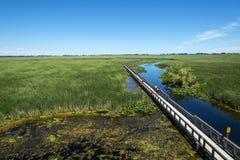 Parque nacional Marsh Boardwalk #1 de Pelee do ponto imagens de stock royalty free