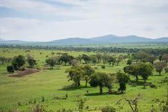 Parque nacional ocidental de Tsavo em Kenya fotos de stock royalty free