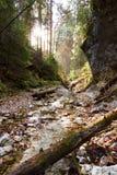 Parque nacional - paraíso eslovaco, Slovakia imagens de stock