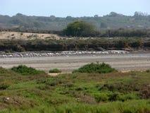 Parque nacional perto de Agadir em Marrocos Imagem de Stock Royalty Free