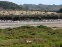 Parque nacional perto de Agadir em Marrocos Imagens de Stock