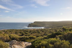 Parque nacional real, Austrália Fotografia de Stock Royalty Free