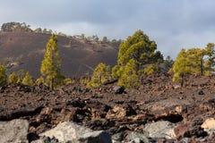 Parque nacional Teide El ir de excursión en el volcán Fotografía de archivo