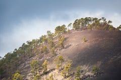 Parque nacional Teide El ir de excursión en el volcán Fotografía de archivo libre de regalías