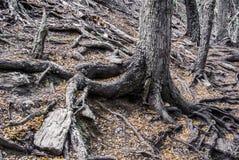 Parque Nacional Tierra del Fuego, Ushuaia imagen de archivo libre de regalías