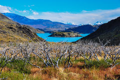 Parque Nacional Torres del Paine, Chile Royalty Free Stock Photo