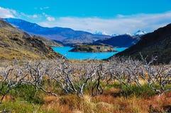 Parque Nacional Torres del Paine, Chile royalty free stock photo