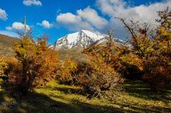 Parque Nacional Torres del Paine, Cile Immagine Stock