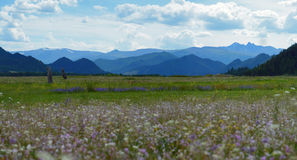 Parque nacional Uch-Enmek Imagens de Stock