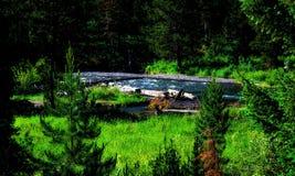 Parque nacional Utá EUA de Yellowstone imagem de stock