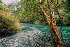 Parque Nacional Vicente Perez Rosales. Picturesque view of a river flowing through Parque Nacional Vicente Perez Rosales stock photos