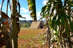 Parque nacional Vinales e suas explorações agrícolas do cigarro Imagem de Stock