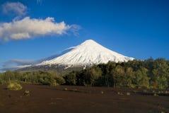 Parque Nacional Vincente Perez różowce Zdjęcia Stock