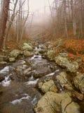 Parque nacional Virgínia de Shenandoah Fotos de Stock