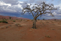 Parque Namib-Naukluft-nacional Fotografía de archivo libre de regalías