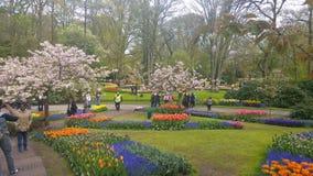 Parque natural Imagem de Stock Royalty Free