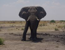 Parque natural Chobe Fotografia de Stock
