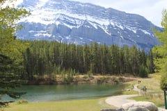 Parque natural de Benff, acampando en el envorinment libre Imagenes de archivo