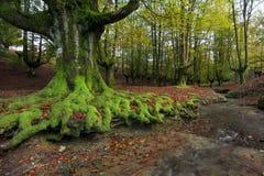 Parque natural de Gorbea Fotografía de archivo libre de regalías
