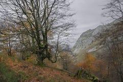 Parque natural de Gorbeia en otoño Fotos de archivo libres de regalías