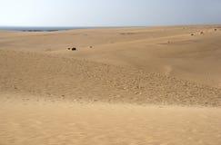 Parque Natural de las Dunas de Corralejo - Fuerteventura - Canary Royalty Free Stock Photography
