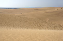 Parque Natural de las Dunas de Corralejo - Fuerteventura - Canary Royalty Free Stock Photography