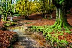 Parque natural de Otzarreta Imagen de archivo libre de regalías