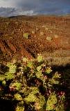 Parque Natural de Pilancones em Gran Canaria Fotos de Stock