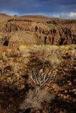 Parque Natural de Pilancones em Gran Canaria Imagens de Stock