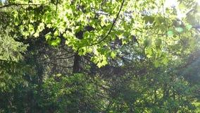 Parque natural de Vitosha cerca de Sofía, Bulgaria El área de oro de los puentes almacen de video