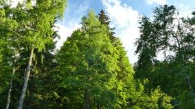 Parque natural de Vitosha cerca de Sofía, Bulgaria El área de oro de los puentes metrajes