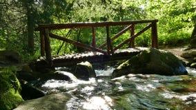 Parque natural de Vitosha cerca de Sofía, Bulgaria El área de oro de los puentes Paisaje de la corriente del agua almacen de video