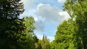 Parque natural de Vitosha perto de Sófia, Bulgária A área dourada das pontes video estoque