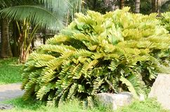 Parque natural fresco com palmeiras imagens de stock royalty free