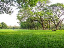 Parque natural para la salud Imagen de archivo