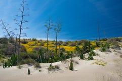Parque Naturalny Cabo de Gata Fotografia Stock