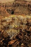 Parque Naturalny De Pilancones Zdjęcie Stock